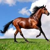 Állatos lovas kirakó